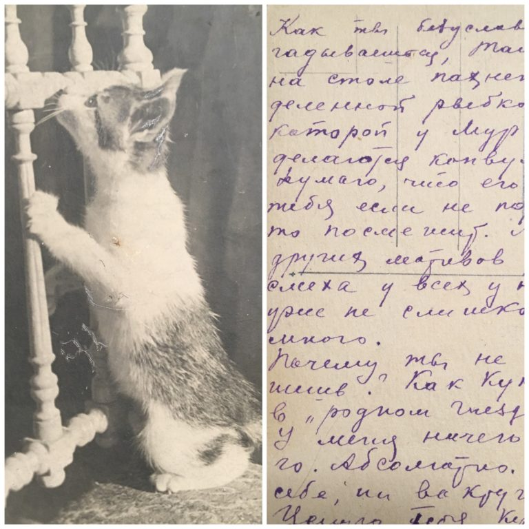 """Письмо на этой открытке из кото-кафе """"Котиссимо"""" написано  21.12.1940. """"Как ты безусловно догадываешься, Ташка, на столе пахнет вожделенной рыбкой, от которой у Мурзика делаются конвульсии. Думаю, что его морда тебя если не порадует, то рассмешит. А ведь других мотивов для смеха  у всех у нас уже не слишком много.  Почему ты не пишешь? Как Куксик в """"родном гнезде""""? У меня ничего нового. Абсолютно. Ни в себе,  ни вокруг себя. Целую тебя, Кукса и наших»"""